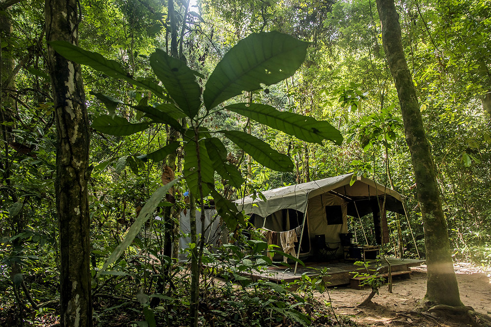 """The """"Camp Boyé"""" luxury tent, an eco-camp managed by the Wild Chimpanzee Foundation (WCF) in the middle of the Taï rainforest, is a two and a half hour walk from the edge of the forest. There are two small eco-camps in the region, one managed by the Wild Chimpanzee Foundation (WCF) """"Camp Boyé"""" and the other by the Ivorian Office of Parks and Reserves, which is the national Ivorian authority . Approximately 150 visitors are staying in one or the other during a year."""