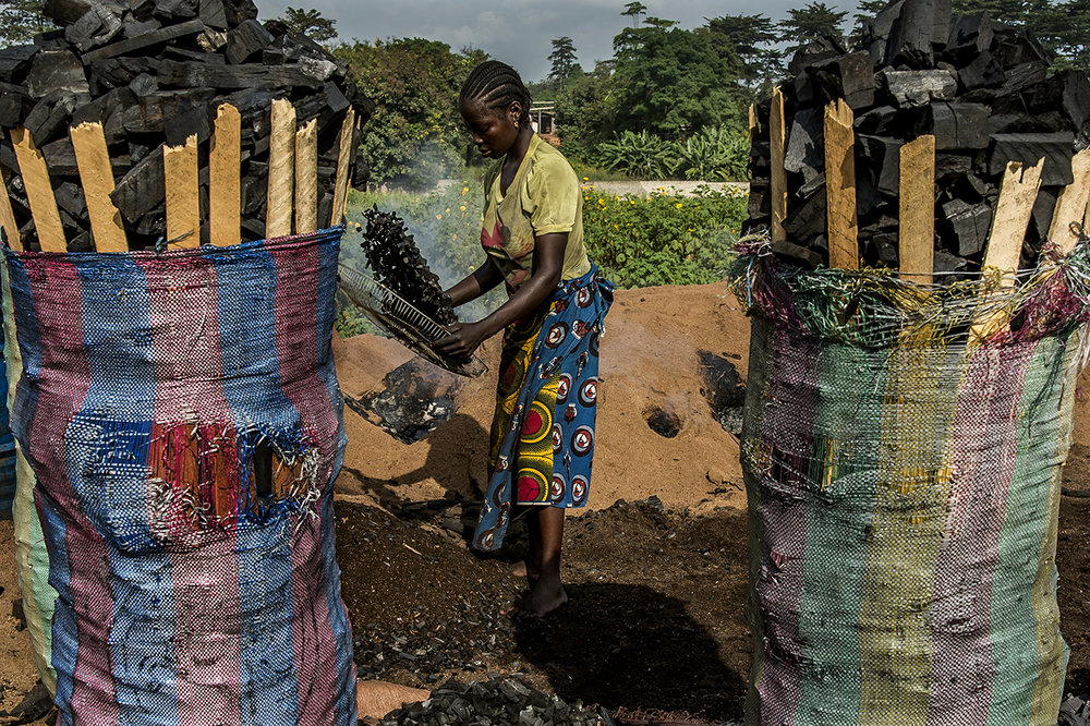 """On the outskirts of the village of Guiglo, a young woman sifted pieces of charcoal before sacking them. The charcoal thus obtained will be sold on the markets of Abidjan at 10 hours of roads from there.  One of the biggest threats to chimpanzees today is the loss of their living space: the African rainforest. Many hectares of forest are destroyed by fire to obtain fields allowing farmers to grow cereals and other fruits of the fields. When the soil is exhausted and the cereals no longer grow, they continue their advance on the forest. But if the forest has been destroyed, chimpanzees have no more space to live. They have to choose between migrating in turn, or dying.  In 2008, the Ivorian Society for the Development of Forest Plantations (Sodefor) estimated that 300,000 hectares of forests disappear every year as a result of the """"misuse"""" of wood, linked to coal production or tree cutting for the export of valuable species."""