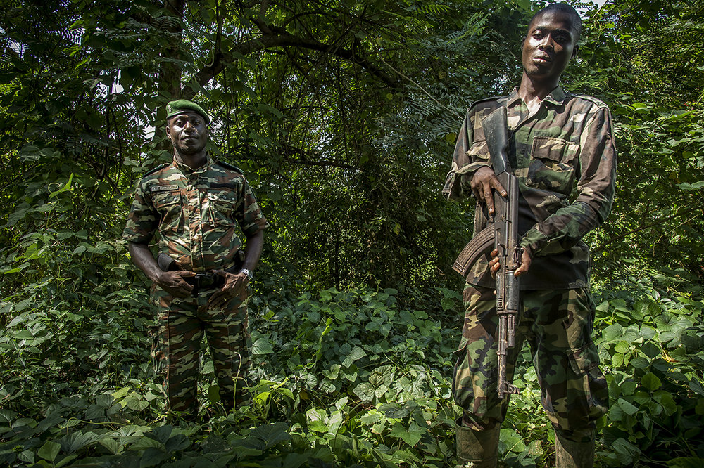 """Emmanuel Francelin Ake (left), Head of Sector of the Ivorian Office of Parks and Reserves (OIPR) in the town of Djouroutou, on the western edge of the Taï National Park, responsible for protecting the park and hunting poachers.  The animals that are killed in the bush for food are called """"bushmeat"""". All animals living in the forest, rats, chimpanzees, gorillas and elephants, including snakes, are hunted for their meat. In most parts of Africa, bushmeat hunting is illegal. Poaching is the greatest danger to the survival of chimpanzees. Indeed, when hunting antelopes or other beasts in the bush, hunters do not hesitate to kill chimpanzees or other monkeys. According to the Bushmeat Crisis Statement 2000, """"this illegal trade destroys the population of chimpanzees living free, just when it is assumed that protecting their life in the wild can greatly contribute to establish knowledge on how to control the spread of AIDS and other infectious diseases in humans.» One of the problems is that for the more than 24 million people living in forested areas of Africa, bushmeat is their only source of animal protein. Urban populations in Central and West Africa increase by 2 to 4% each year. Families also practice animal husbandry, but as financial investment and insurance. Also bushmeat provides the rural poor with a lucrative source of income and food."""