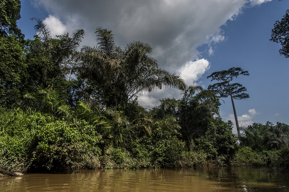 The Hana River. Beyond, the forest and Taï National Park. The chimpanzee population is estimated at 300-500 individuals.