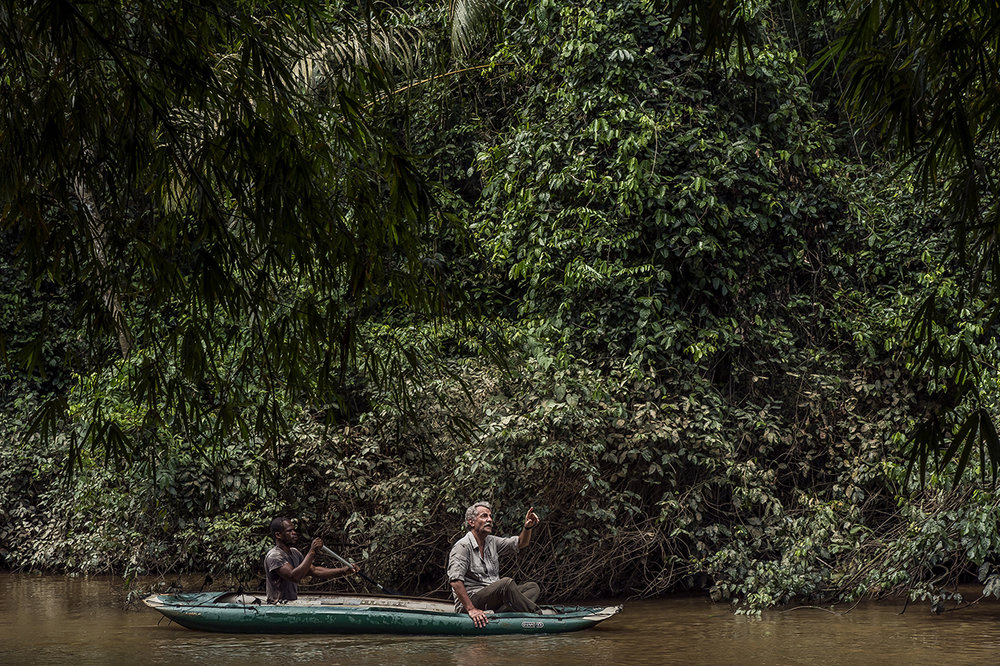 Christophe Boesch, Franco-Swiss Primatologist, Director of the Department of Primatology of the Max Planck Institute of Evolutionary Anthropology (Leipzig, Germany), who has been conducting research in the Tai National Park since 1976 to better understand behavior and life chimpanzees, crosses the Hana River to enter the park where an estimated 300-500 chimpanzees are living.