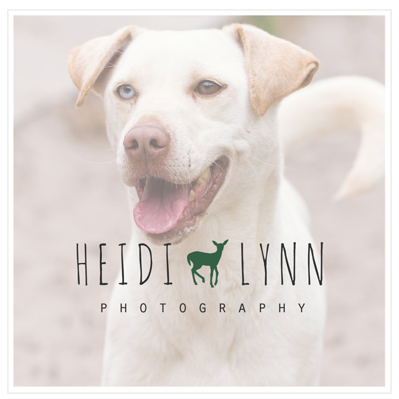 Pet Photography Branding
