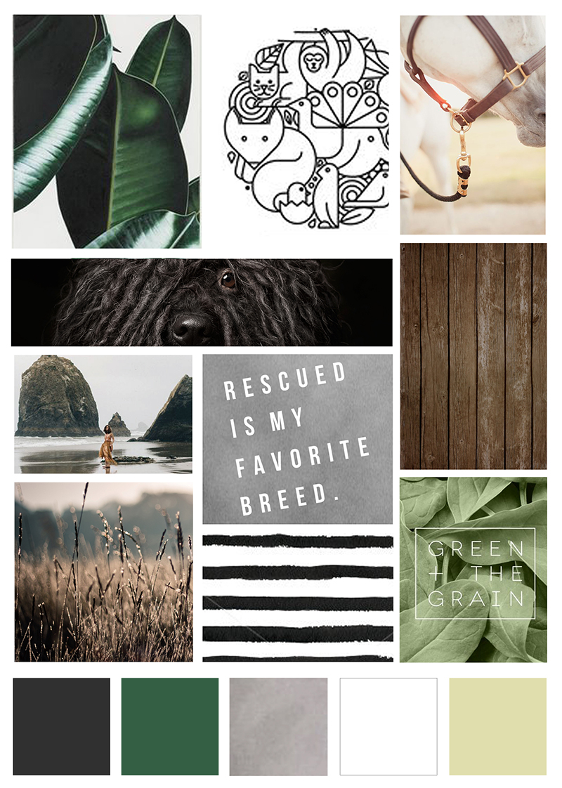 Pet Photography Mood Board