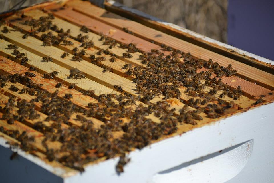 hive to split.jpg