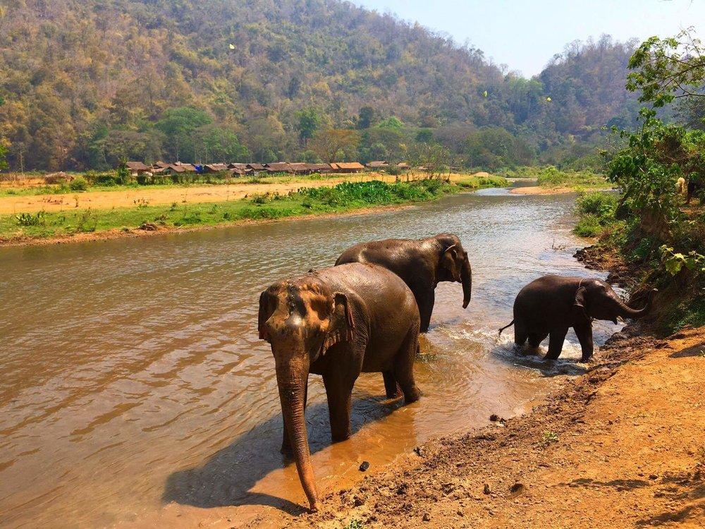 Washing the elephants at Elephant Nature Park