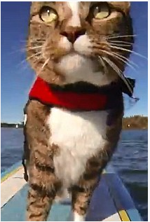 Not my above photo, but very similar to the awe I saw and experienced. A floating cat on a board?