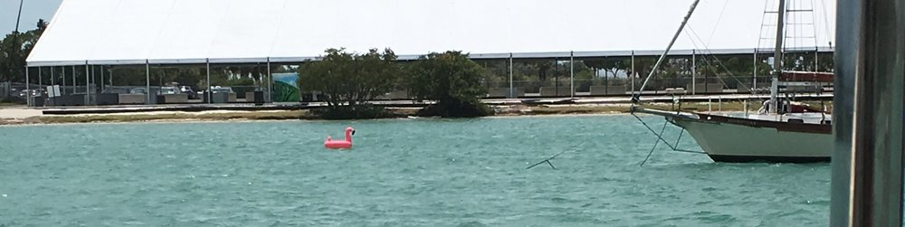 This pink flamingo is floating away from the party.