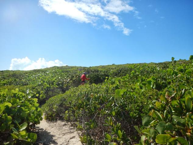 The Flip Flop trail path through the mangroves.