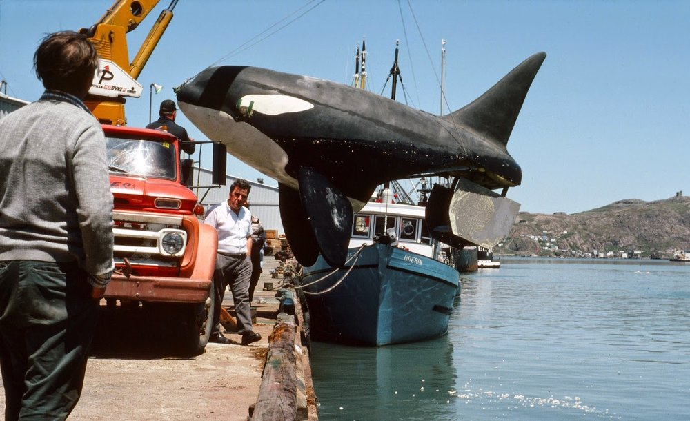 Orca whale replicas being born in a warehouse and getting ready to be tested and shipped to the movie set of ORCA.