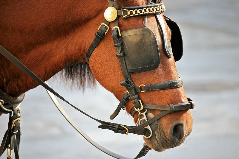 Dual blinders on a one-eyed horse?