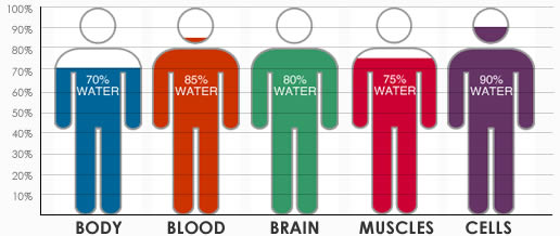 We are made of water; H20 is talking to us. Are we listening well enough to save life?