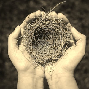 Have you ever found a nest?