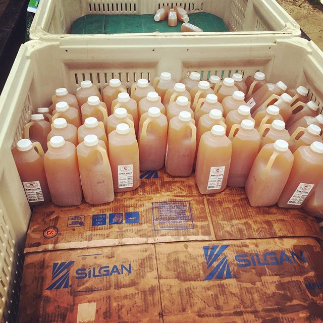 Wyd with 100 gallons of free expired cider? Make 100 gallons of cider vinegar fo yo animals 🤪 #acv #freestuff #wepobutweproud #applecidervinegar #probiotics #datvinegardoe