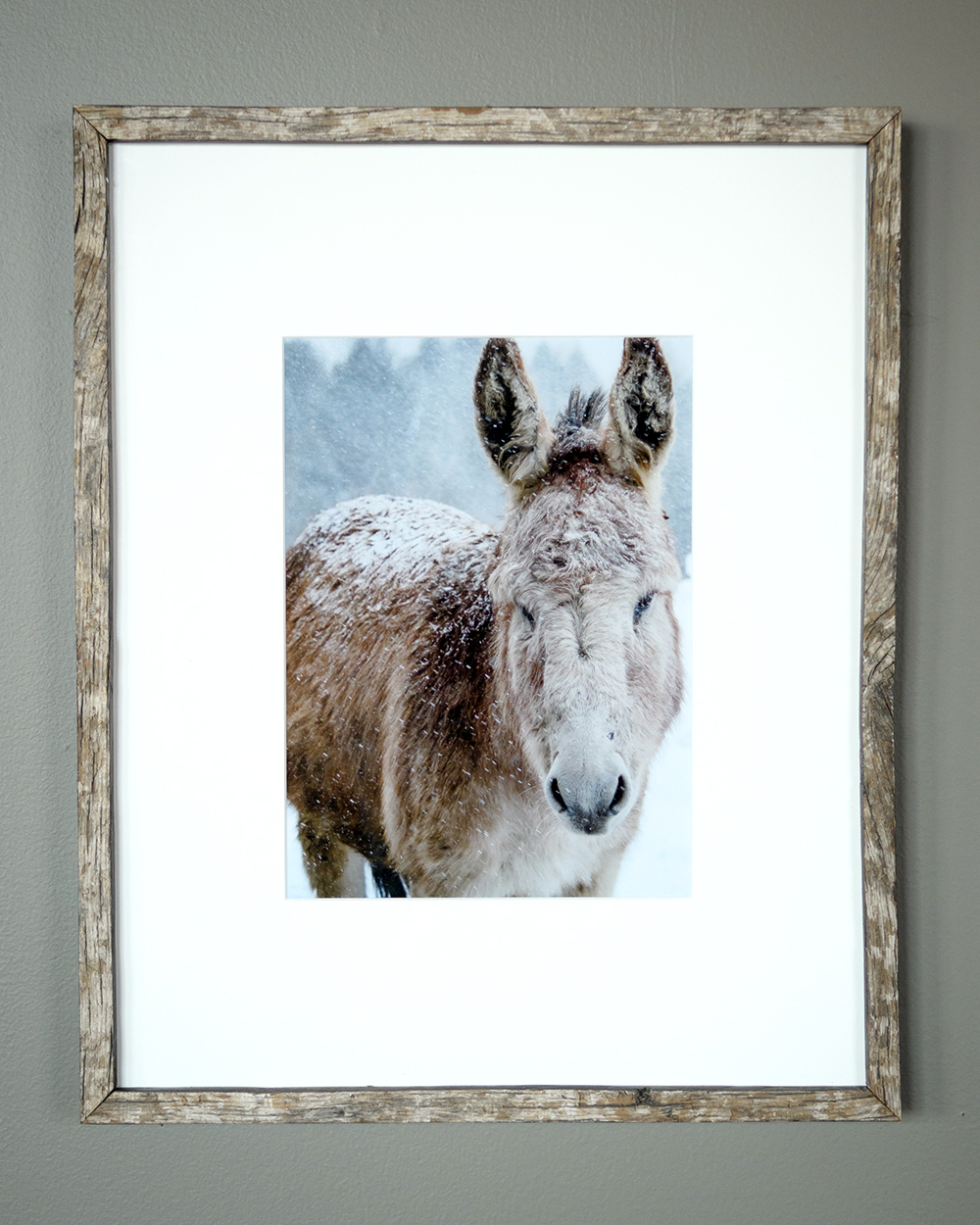 Light Donkey - North Star Sheep Farm, Windham (SOLD)