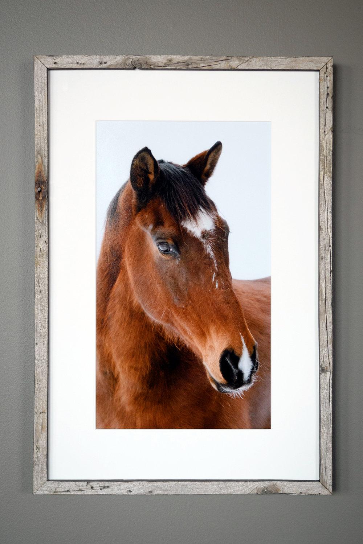 Horse - Pownal