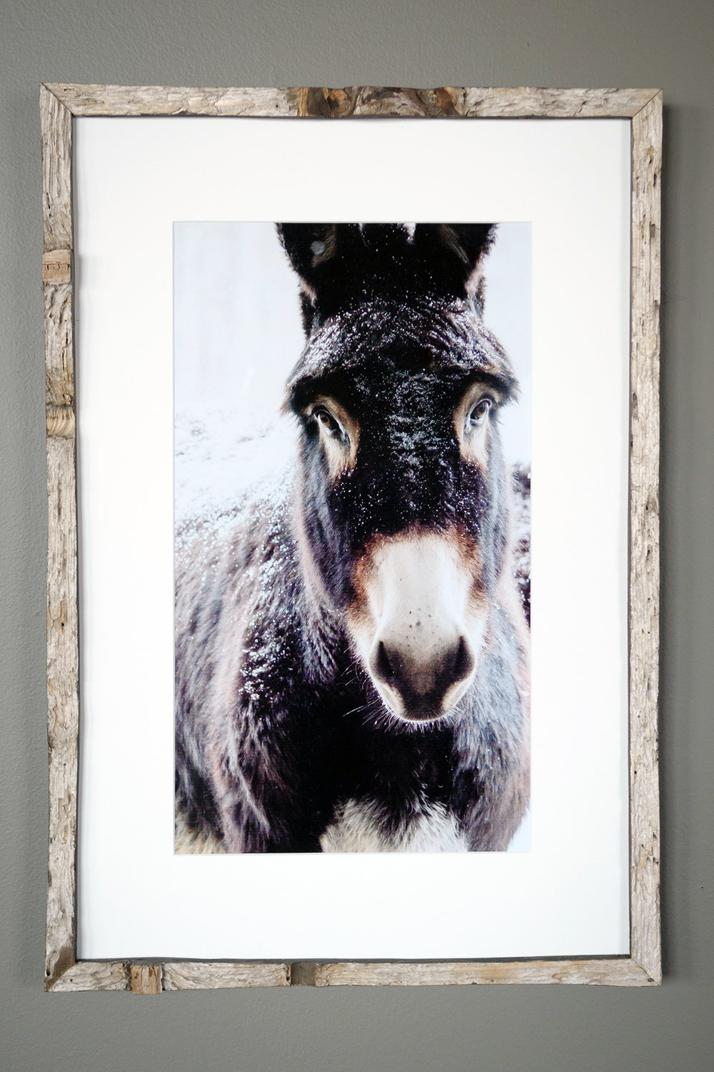 Dark Donkey - North Star Sheep Farm (SOLD)
