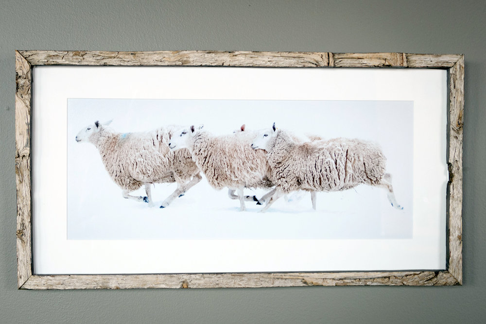 Running Sheep - North Star Sheep Farm, Windham (SOLD)