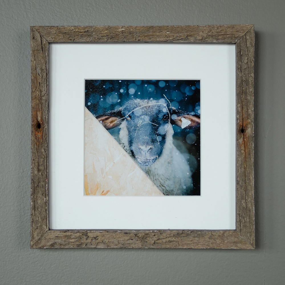 Sheep and Snow - North Star Sheep Farm, Windham (SOLD)