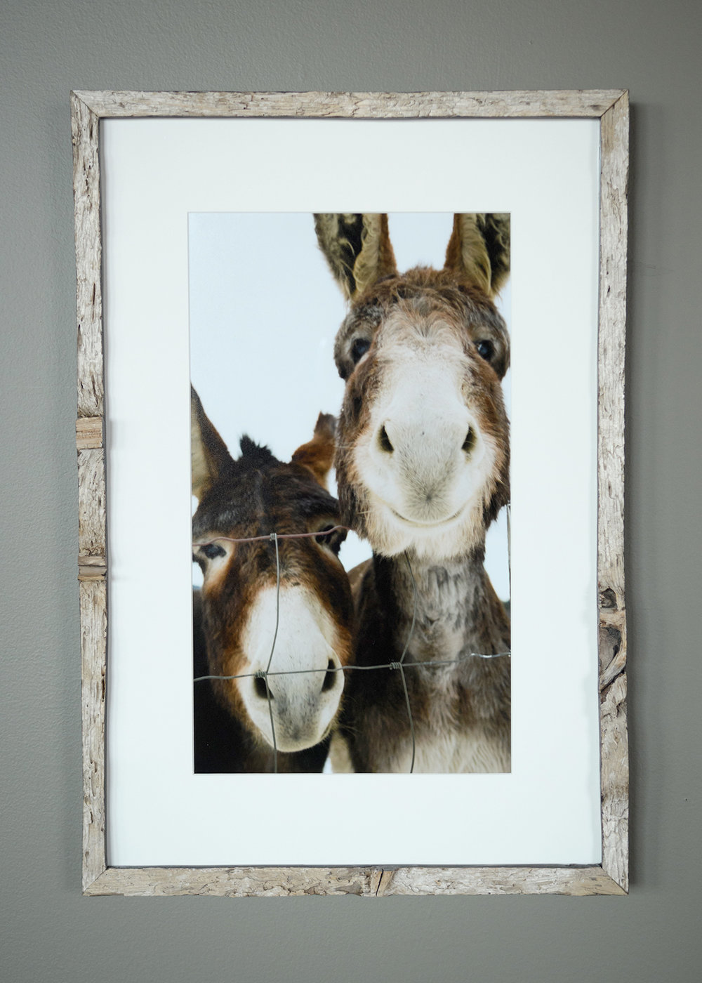 Two Donkeys - North Star Sheep Farm, Windham - (SOLD)