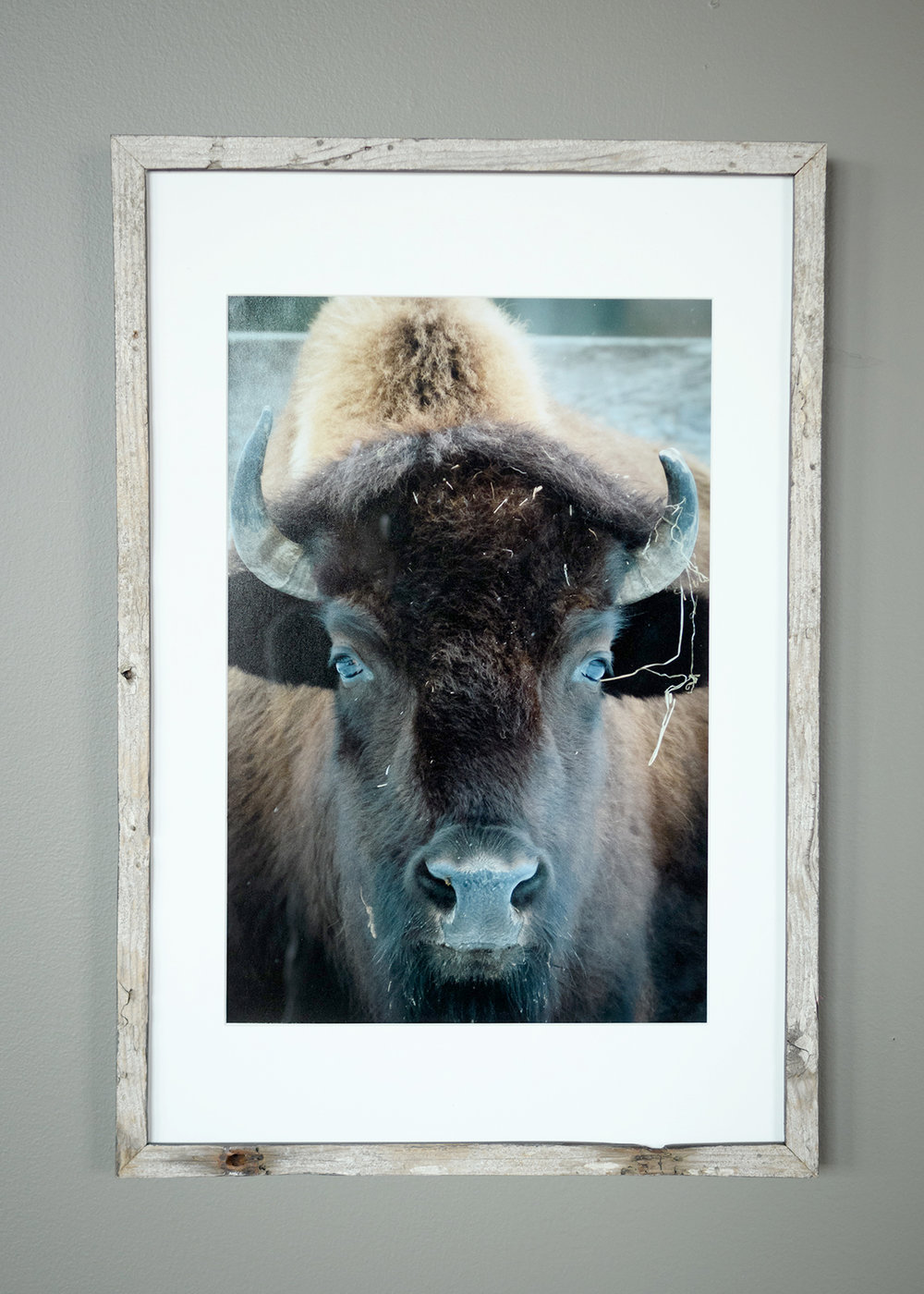Buffalo - West Paris (SOLD)