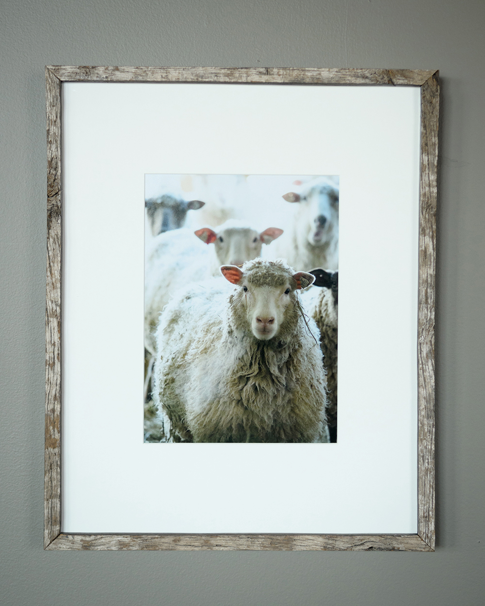 The Flock - North Star Sheep Farm, Windham (SOLD)