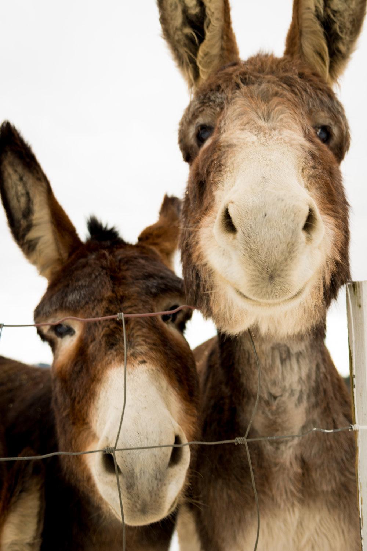 2 donkeys_(c) catherine frost.jpg