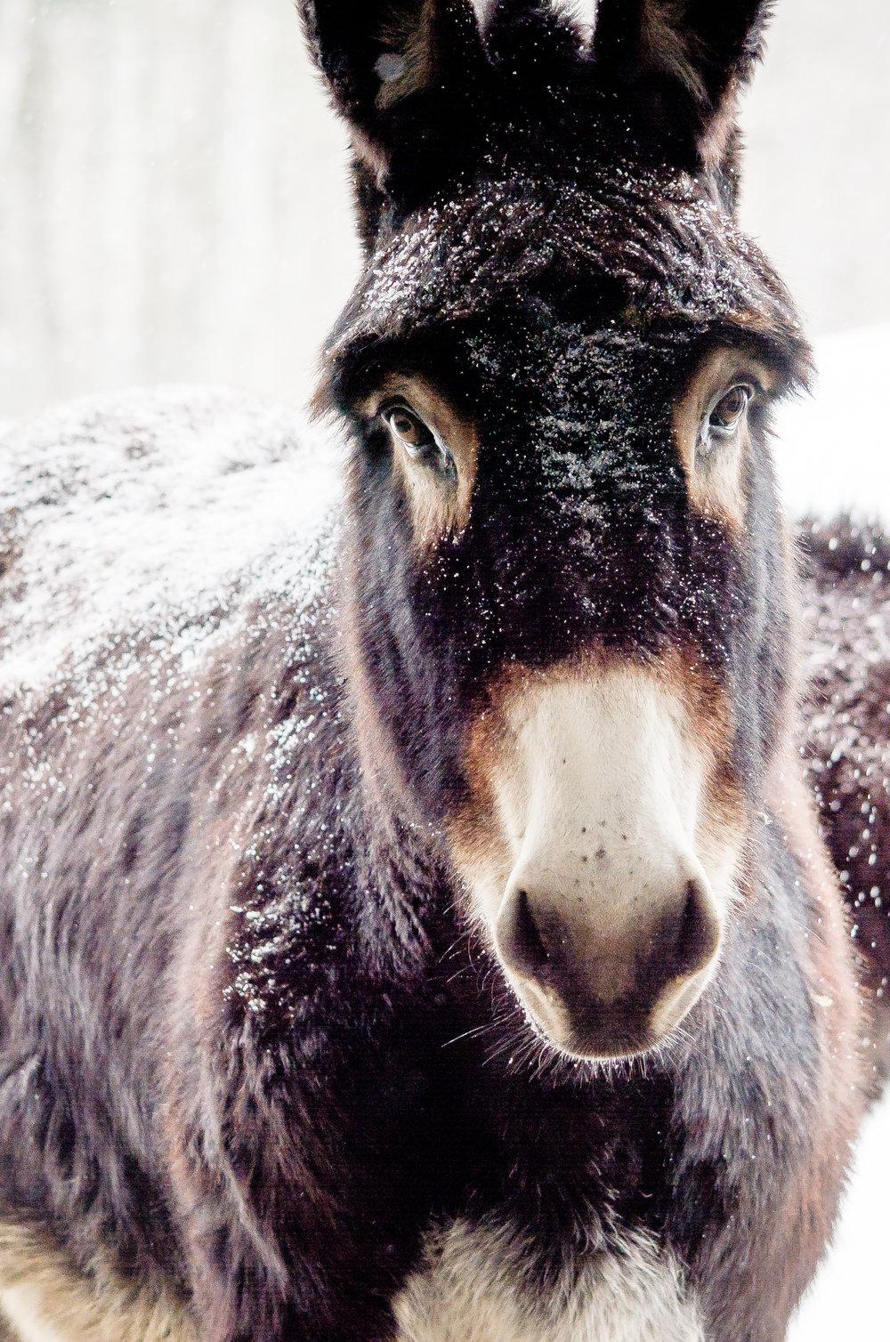 donkey_(c) catherine frost.jpg