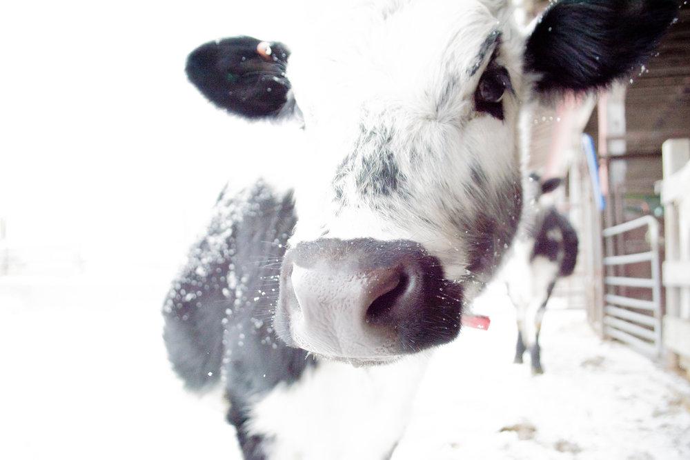 randall_(c) catherine frost.jpg