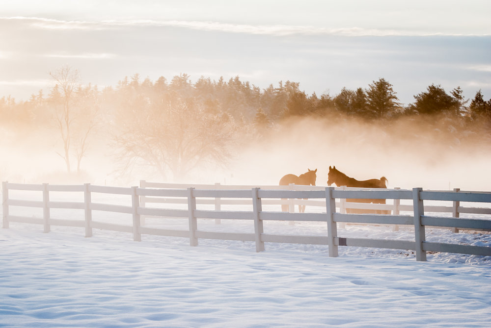 horses in fog_(c) catherine frost.jpg