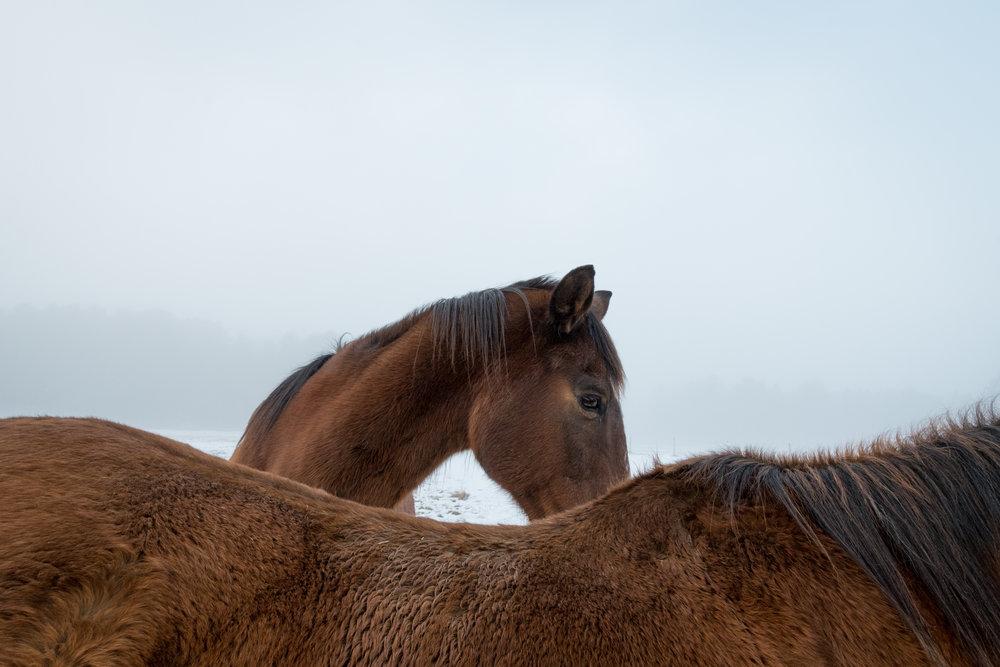winter fog 2-227.jpg