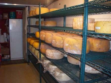 cheeseaging