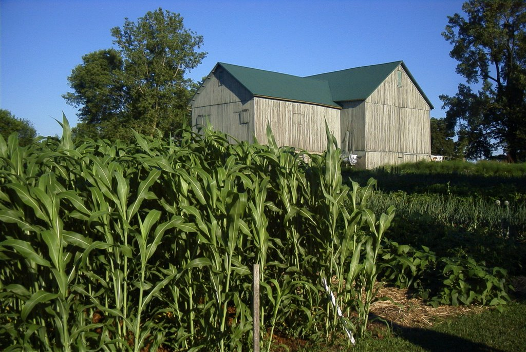 millet and barn