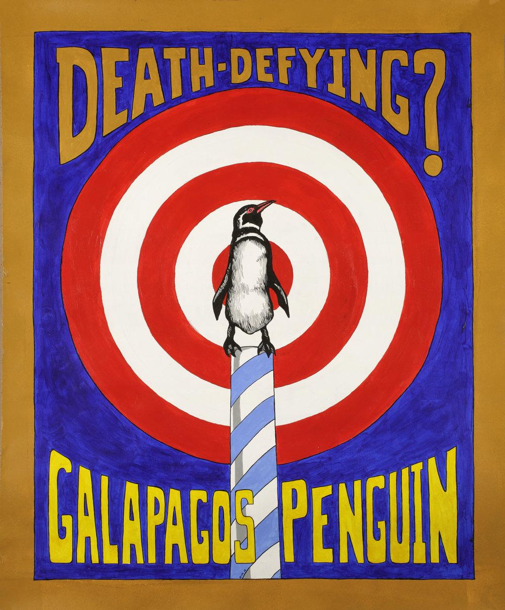 Galopagos Penguin.jpg
