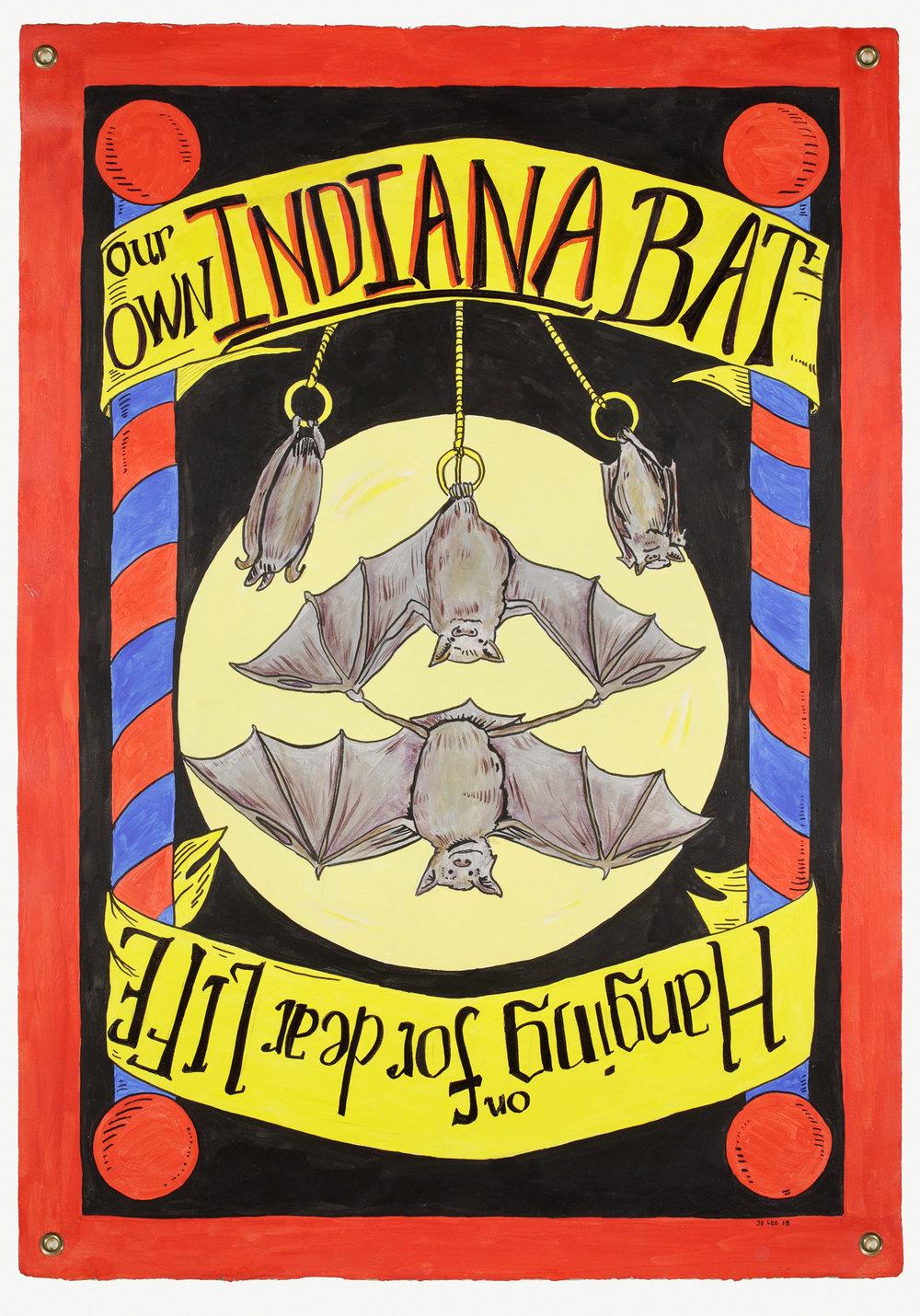 Indiana Bat copy.jpg