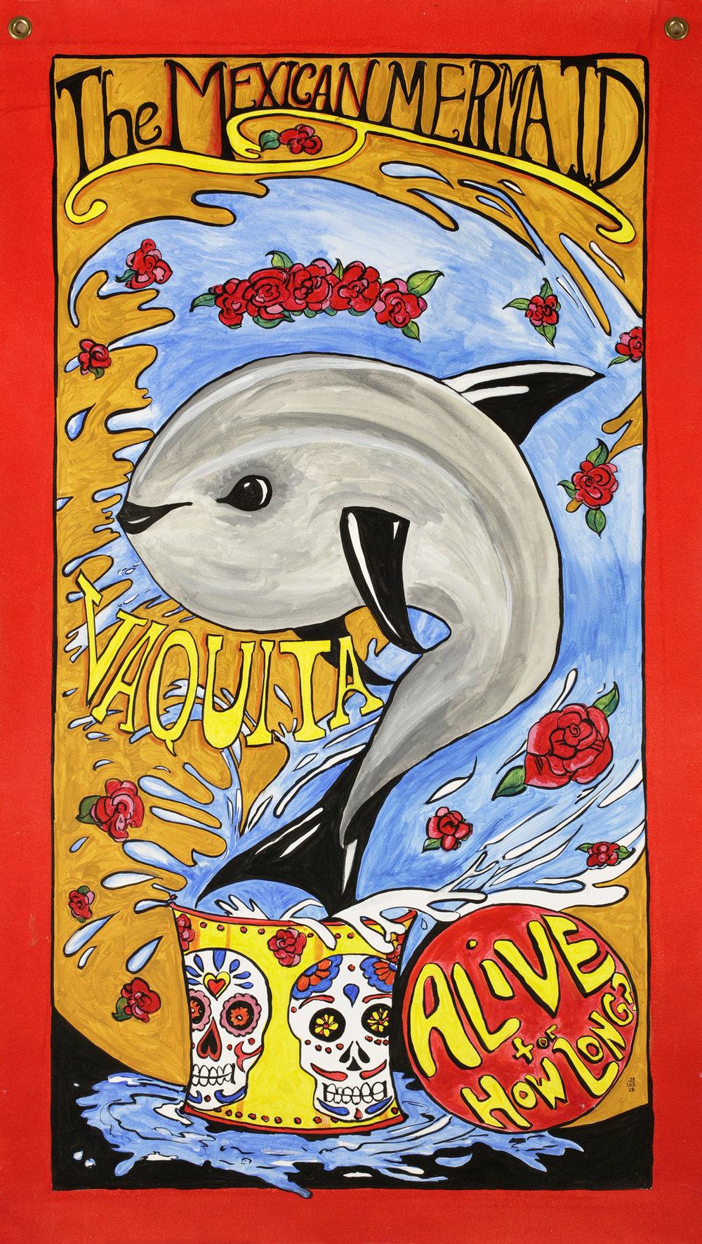Vaquita Tiny Dolphin.jpg