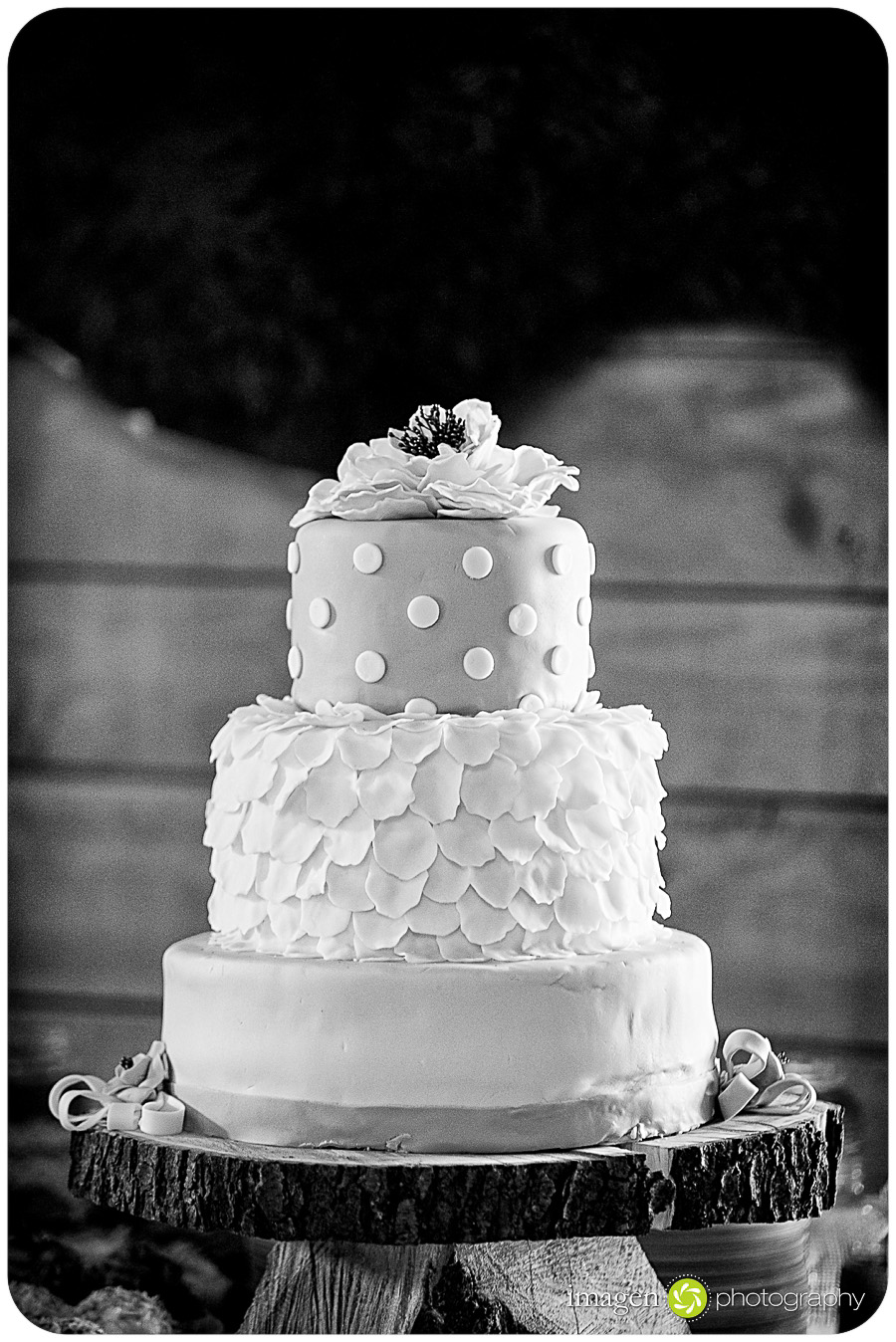Red Run Bison Farm Wedding Marshallville Ohio, Wedding Photography, Wedding Cake