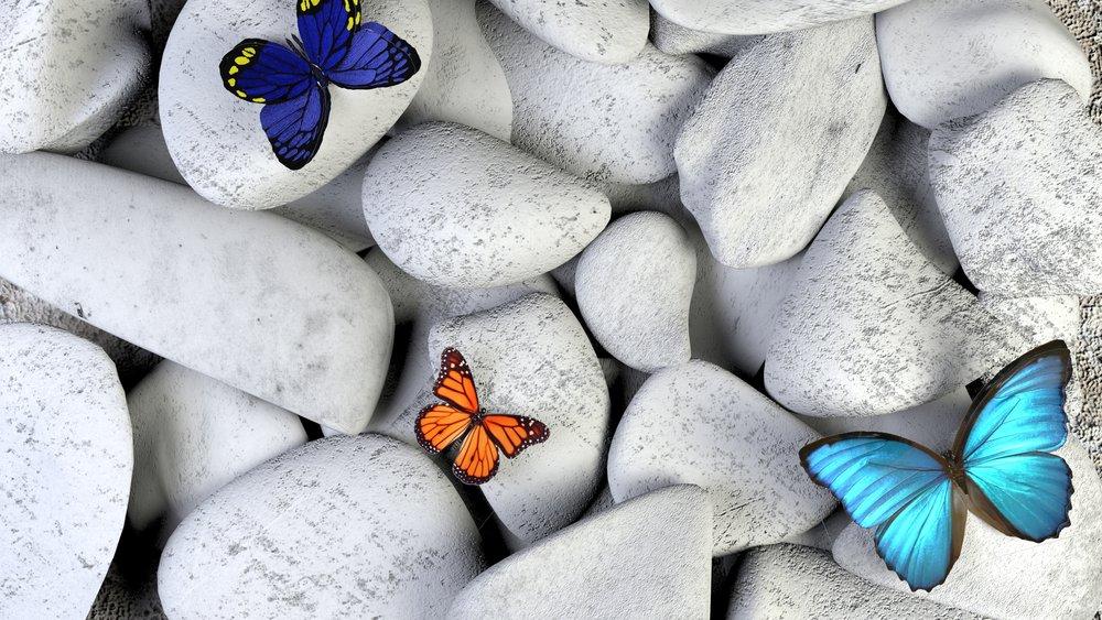 Chloe Lankshear Therapy Butterflies
