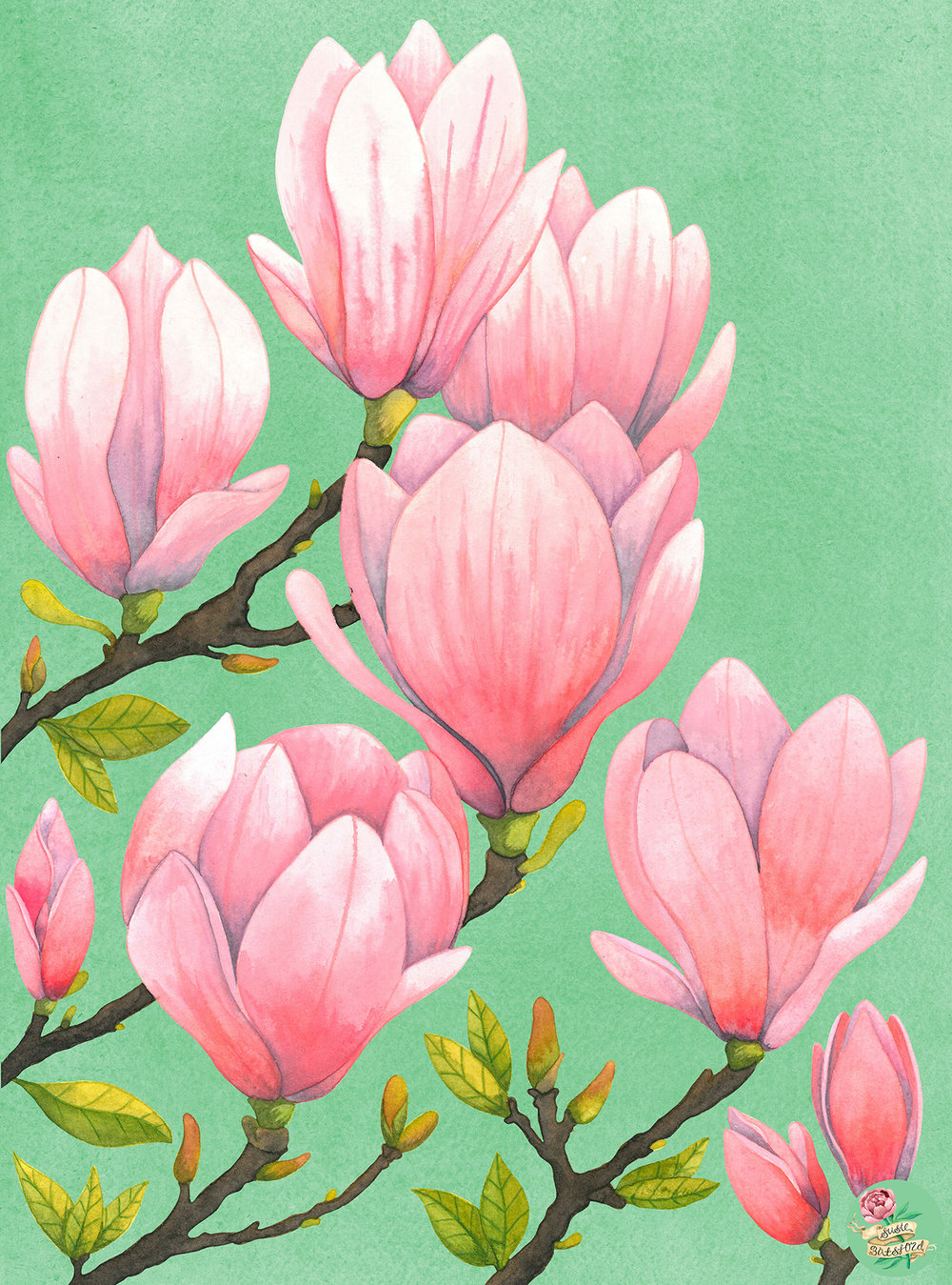 Magnolias Watercolour Painting by Susie Batsford