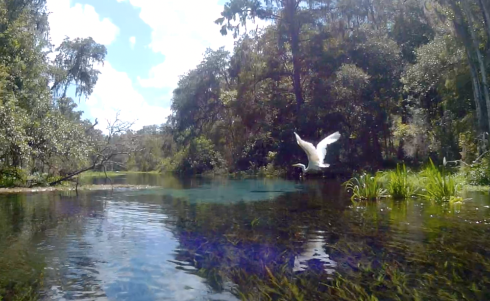 ICHETUCKNEE SPRINGS, FL  (video)   By: Siren Williams   Put on your bikini, grab your inner tube, and lets go floating.