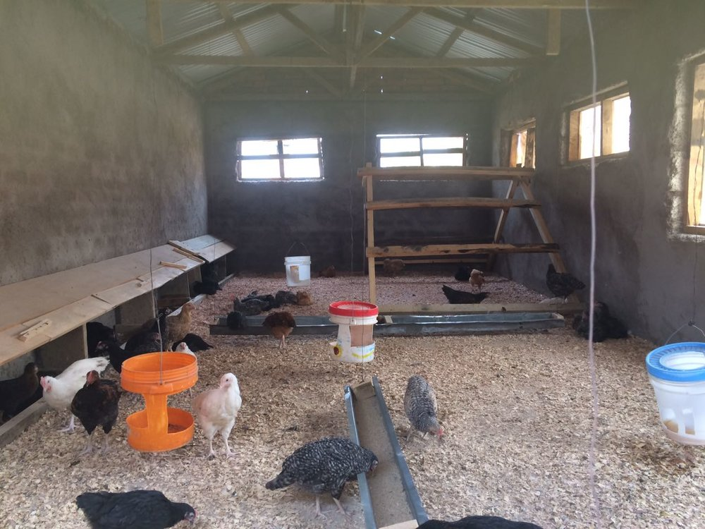 The chicken coop is complete, and we expect to start getting eggs for the children in the next few weeks. This was made possible by Elizabeth Pocsik, her son Will and their family and friends.