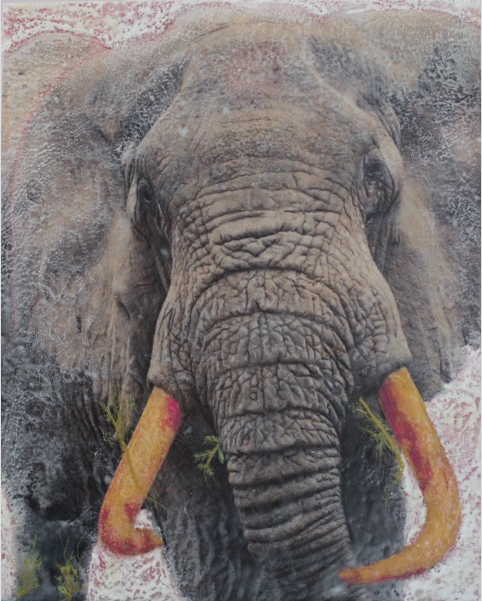 Bull Elephant,, Ngorogoro Crater, Tanzania, 2009 Mixed media, photography, encaustic, 16x20 on wood panel