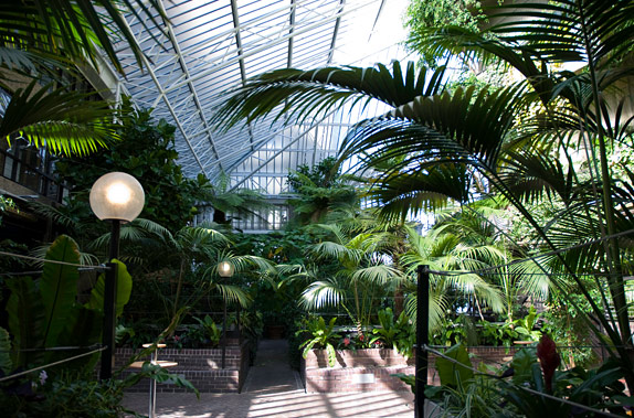Must Do - Visit the Barbican's Secret Tropics one Sunday      Barbican Conservatory Website