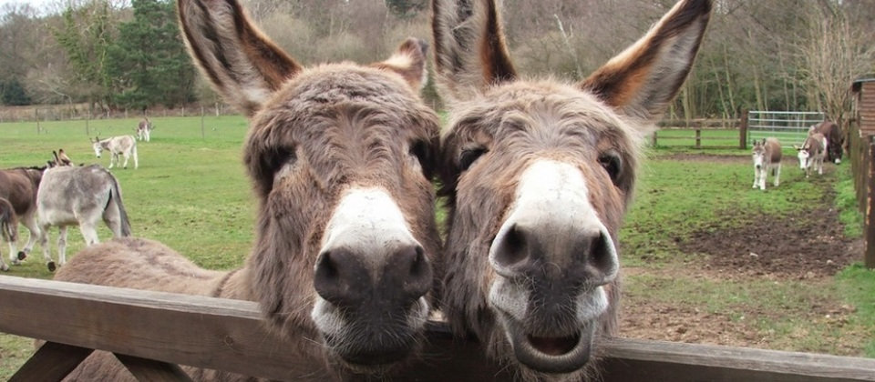 Visit the donkeys at their sanctuary in Sidmouth.    £ | Sidmouth Donkey Sanctuary | Slade House Farm, Sidmouth EX10 0NU |  Website