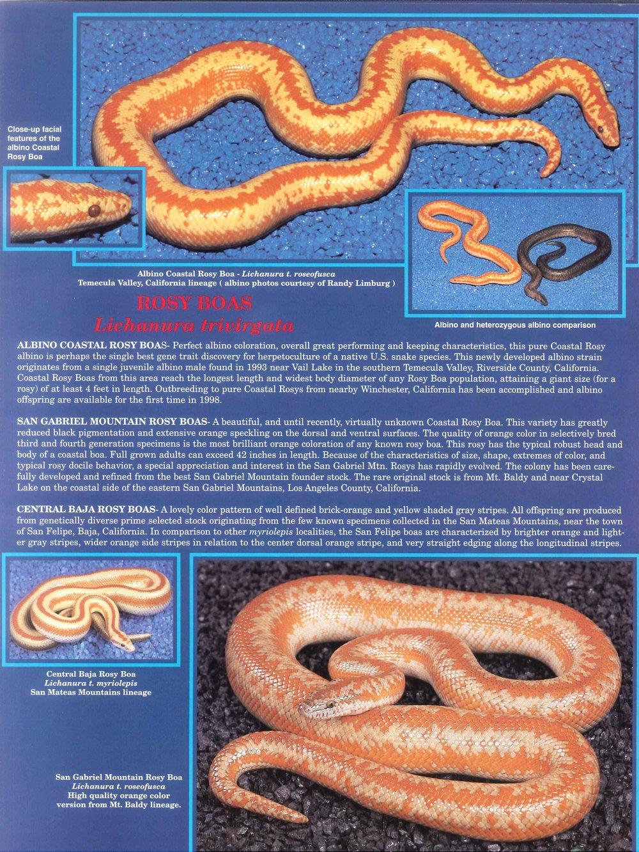 Professional Breeders Brochure_5.jpg