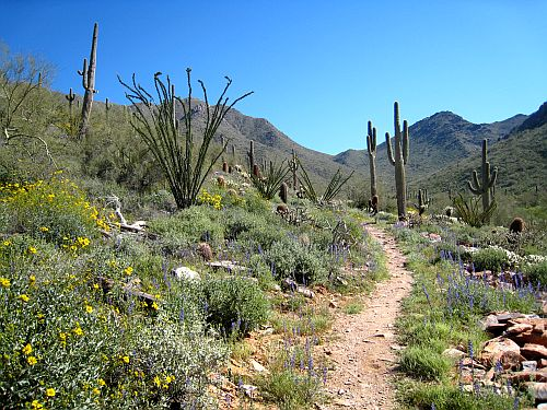 Trail on the outskirts of Wickenburg, Arizona