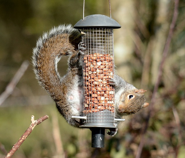resourceful squirrel.jpg