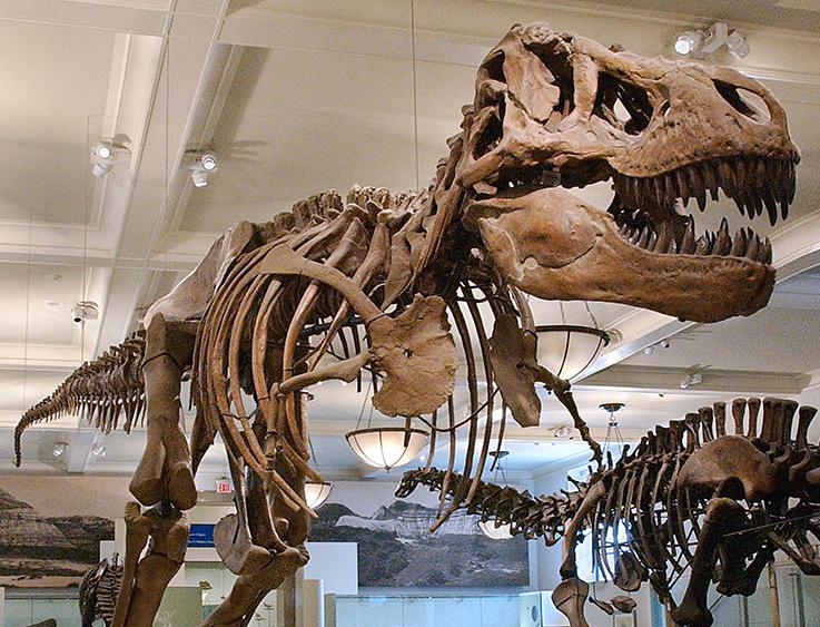 dinosaur amnh.png
