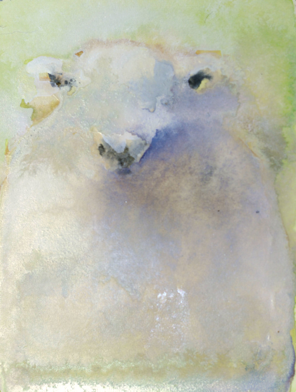 sheep no. 2_4x3 inset on 11x7.5 paper.jpg