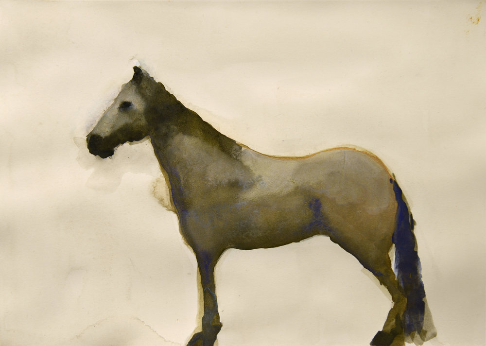 Rebecca_Kinkead_Grey Mare_9.5x13.25_mm on paper.jpg