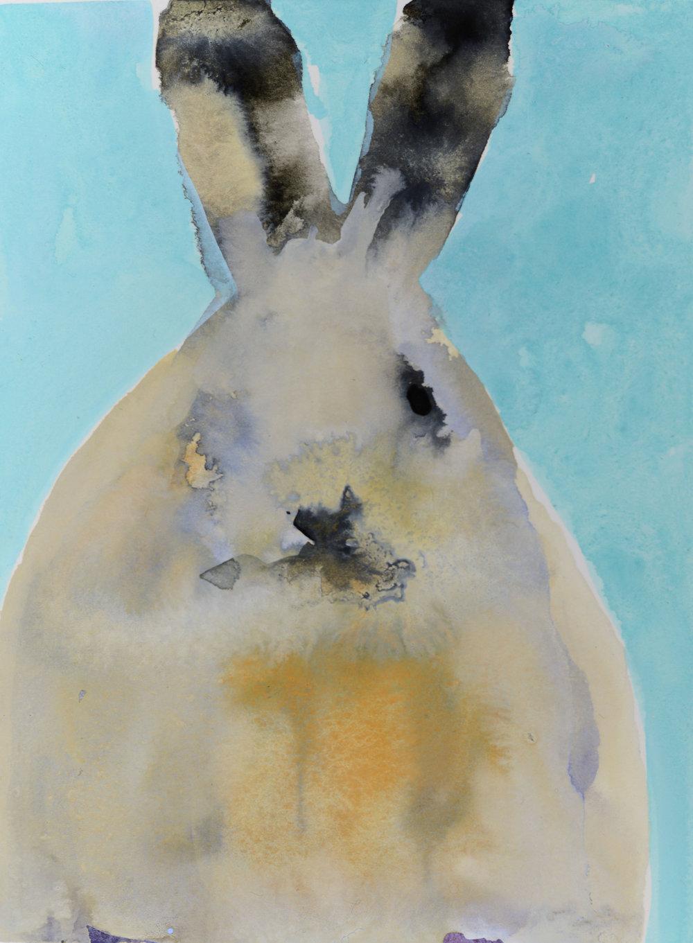 Rebecca_Kinkead_Arctic Hare Study no.10_inset on 11 x 7.5.jpg